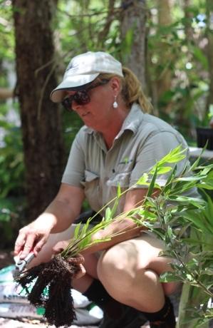 Yvette plant