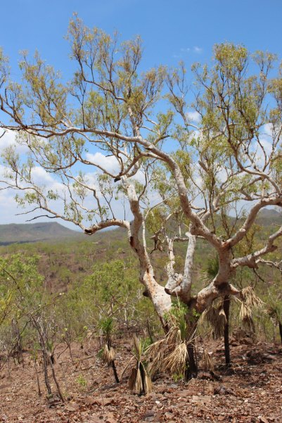 Dry Season view2