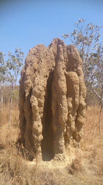termite mound- keith and Rick's