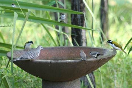 birds at bird bath