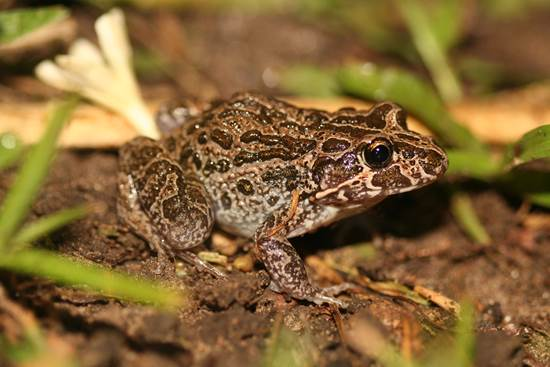 Enhancing Habitat for frogs Land for Wildlife Top End