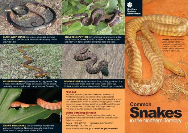 snake_brochure_mar09_Page_1