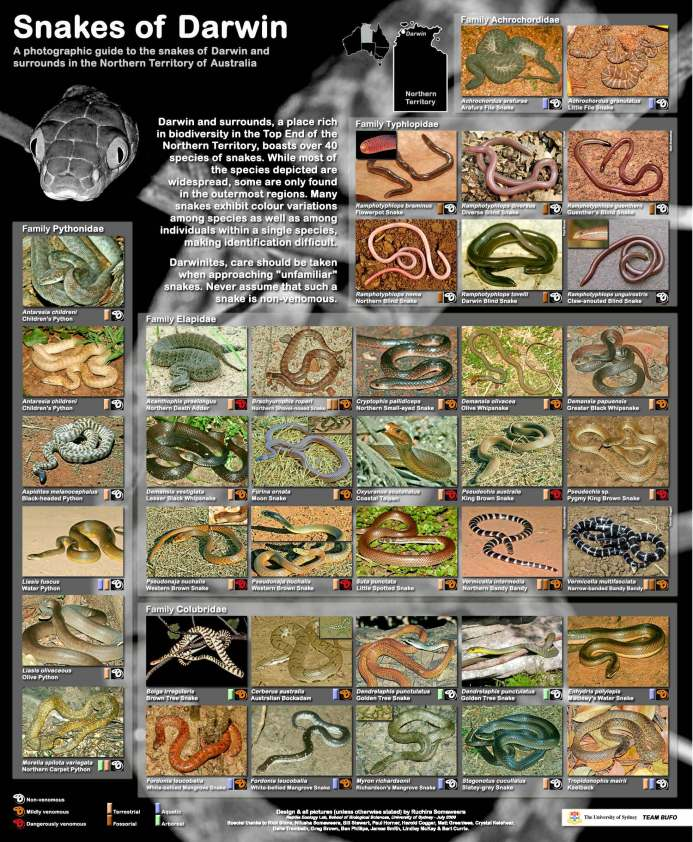 Snakes_of_Darwin_RS-webcopy