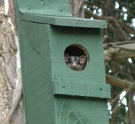 nest-box