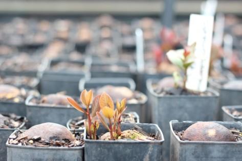 seedlings-sprouting