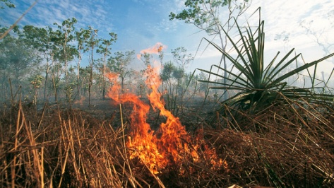 dry_season_burning_off_dar_sur_u_975190_540x304.jpg