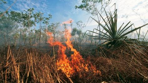 dry_season_burning_off_dar_sur_u_975190_540x304.jpg