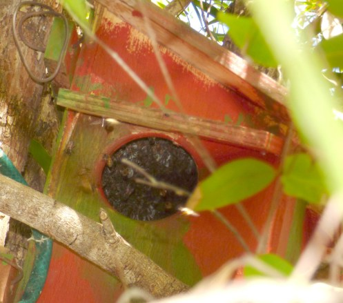 Bees in nestbox July 2017